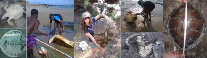 Turtle poaching around Tofo