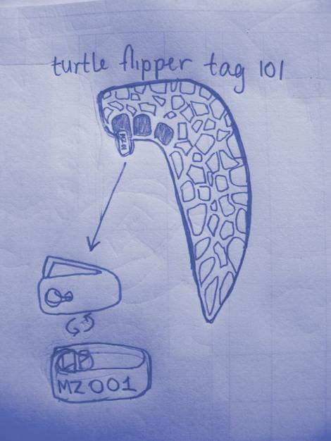 Turtle bling