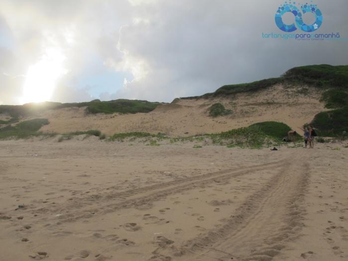 leatherback nest